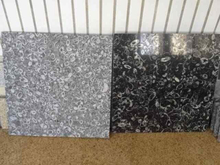 Sea Shell Black Marble Tile & Slab