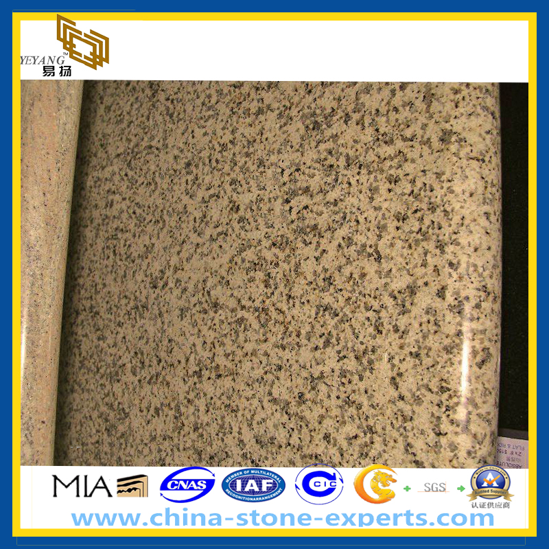 Chrysanthemum Yellow Granite Countertop (YQZ GC)